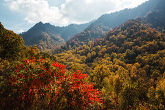 Down the Chimney (Brian Truono Photography) Tags: chimneytops greatsmokymountainsnationalpark nps nationalpark nationalparkservice smokymountains tennessee autumn clouds forest green landscape leaf leaves mountains natural nature sky trees woods yellow gatlinburg unitedstates us