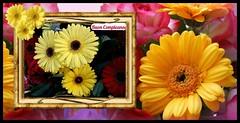 Buon compleanno Vittoria (collage42 Pia-Vittoria//) Tags: fiori flowers fleur flor blume gerbera