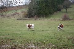 Steaks im Dünbach-Tal