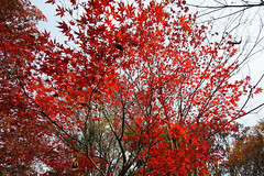 20161204-DS7_6480.jpg (d3_plus) Tags:  a05 wideangle d700 thesedays  architecturalstructure   kanagawapref   sky park autumnfoliage  japan   autumn superwideangle dailyphoto nikon tamronspaf1735mmf284dild  street daily  architectural  fall tamronspaf1735mmf284dildaspherical touring streetphoto  nikond700 tamronspaf1735mmf284 scenery building nature   tamron1735   tamronspaf1735mmf284dildasphericalif   autumnleaves