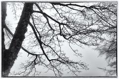 _D6D5197 (Lorenzo Venturini - Lorebike) Tags: d600 lorebike madonna dell acero