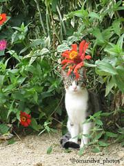 (@omarsilva_photos) Tags: flowers naturaleza flores nature cat venezuela ngc gatos nationalgeographic valenciavenezuela omarsilvaphotos