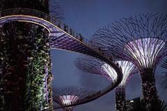 Sky Garden (frank.gronau) Tags: frank sony singapur skygarden gronau alpha7