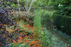 Pad bij de Crocosmia (Henk M gardenphotoblog) Tags: garden gb tuin laren gld tuinbezoek addink nimg8492