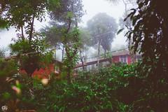 IMG_6244 (athingcalledlife) Tags: blackandwhite india green art nature rain photography colours lush coorg virajpet vsco