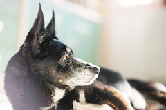 My model (ictor) Tags: light portrait dog pet eye photo bokeh sony flare fe f18 a7 creamy vittorio ciccone alpha7 bokehlicious ilce7 sel55f18