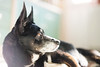 My model (Ⓥictor) Tags: light portrait dog pet eye photo bokeh sony flare fe f18 a7 creamy vittorio ciccone alpha7 bokehlicious ilce7 sel55f18