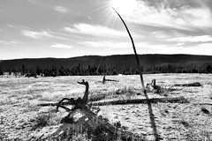 Biscuit Basin (Ok Andrew) Tags: park nikon basin biscuit national yellowstone d5500