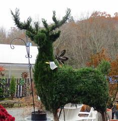 $900Reindeer Topiary (Jackie***) Tags: autumn fallleaves mountains rain fog fallcolors pumpkins autumnleaves blueridgeparkway blowingrock autumncolor boonenc fallmums