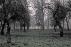 Autumn Renavas mansion (14)e (algimantas_tirlikas) Tags: autumn trees mist fog buildings landscape