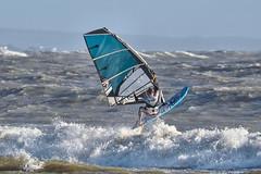 PC310826-Edit (Brian Wadie Photographer) Tags: gulls oystercatcher windsurfing kiting em1 goodlight 14xtc avonbeach canon70300lis hemgistburyhead