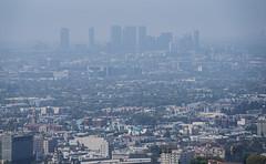 Smoke and Smog shrouding the LA Skyline (dog97209) Tags: smoke smog shrouding la skyline from griffith park observatory los angeles california
