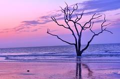Stand Tall (ott.geoffrey) Tags: botany bay edisto island south carolina usa beach reflection tree colorful water sunset serene sea sunrise purple outdoor dusk plant