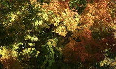 Light and Color Landscape (Harry Lipson) Tags: trees colors light sunlight foliage fall autumn landscape maples fallfoliage harrylipson harrylipsoniii serenity