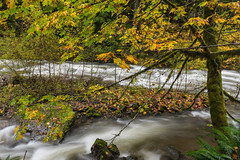 Fall stream (jeff's pixels) Tags: mountrainer nation forest stream nature fall autumn creek river long exposure nikon d750 outdoor colors