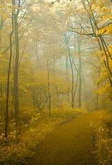 sentier sous la brume (cb cline) Tags: brouillard brume sentier montagne montroyal automne montral arbres feuilles branches virage pluie paysage fort
