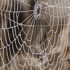 Cobweb droplets (Mark Heine Photos) Tags: cirrus wilsonflats elora sunrise tree grandriver spiderweb clouds teasels ontario markheine morning canada cobweb field westmontrose ca