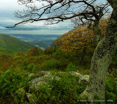 JW_ShenandoahNational2016_Day4_05_23_16_38-Edit (HarrySchue) Tags: nationalparks shenandoahnationalpark nikon nature fog mountains valley trees serene spring d800e