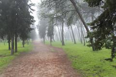 IMG_8299 (Juan Manuel Sanchez) Tags: otoo adrianospicture juanmanuelsanchez hojas arce rojo niebla fog campo montaa madrid espaa canon d60 naturaleza maana cielo silueta contraluz cesped hierba bosque norte