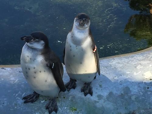 Thumbnail from Copenhagen Zoo