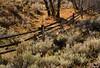 Log Fence (arbyreed) Tags: arbyreed fence fenceline logfence polefence woodenfence fall tree sage sagebrush rabbitbrush hff fencedfriday