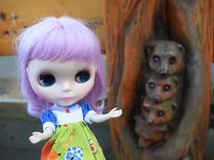 Isolde Brittany found some meerkats! (Bebopgirl1969) Tags: blythe lavenderhug edinburghzoo