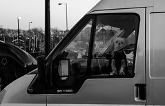 2016_330 (Chilanga Cement) Tags: fuji fujix100t x100t xseries x100s x100 monochrome dog van guarddog pooch puppy sentinel window glass door handle k9 doggy