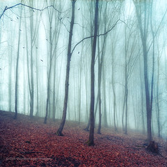 no noize (Dyrk.Wyst) Tags: 2016 bergischesland bume deutschland germany hang landschaft laub licht natur nebel stimmung wald winter wuppertal atmosphere calm cold feucht fog forest hill humid landscape leaves light mood nature outdoor silhouettes trees wet woodland