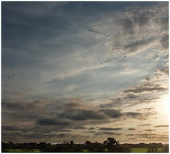southward bound (kurtwolf303) Tags: fhr germany sky himmel birds vgel wolken outdoor skyscape olympusem1 omd microfourthirds micro43 systemcamera insel island natur nature 250v10f zugvgel topf25 topf50 500v20f topf75 750views 800views topf100 deutschland 900views 1000v40f 1500v60f