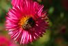 20160924_Cinq_Sens_Yvoire (13 sur 13) (calace74) Tags: fleurs macro jardinsdes5sens yvoire rhonealpes foretderipaille hautesavoie nature panorama thononlesbains