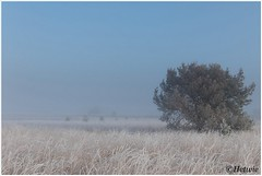 Frosty morning (HP019912) (Hetwie) Tags: strabrecht heather nature ice ochtend kou fog natuur zonsopkomst rijp frozen sunrise strabrechtseheide frost heide mist ijs lierop noordbrabant nederland