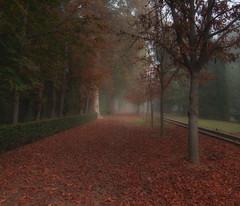Nieblas en Aranjuez (Carlos Javier Pérez) Tags: niebla aranjuez noviembre otoño hojas paseo nikon d90 nikond90 tokina1116mm filtrolee claroscuros jardines bosque