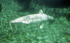 lb-019-2002-016 (Paul-W) Tags: connecticut mysticaquarium 2002 vacation mystic beluga whale tabk