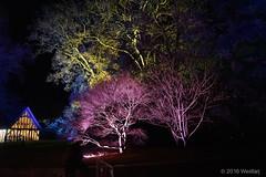 DSC04081 (Twareg) Tags: 2016 aboretum bpw enchanted forest westonbirt bathphotowalk gloucestershire england handheld night nightshot