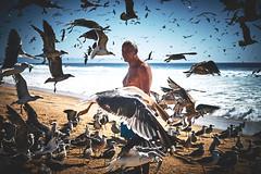 Calmness in the Eyes (Matthias Matula) Tags: sea birds street beach sun coast ocean rough waves animals summer man eye sand sony look seagull seagulls lisbon lisboa portugal calmness candid wild atlantic zeiss praia contact caparica sel55f18z