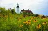 Portland Head Lighthouse (HSS) (WilliamND4) Tags: hss sliderssunday lighthouse portland flowers painterly nikon1v3