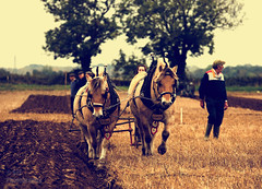 deepingIMG_7761_edited-4 (TripleS2007) Tags: deeping lincolnshire horse horses vintage plough ploughing autumn cultivation cultivating agriculture farming shire