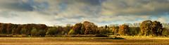 (Anita van Schaik) Tags: autumn fall forest trees nature nikon netherlands dutch clouds colours outdoor citrit