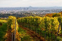 Vienna Vineyards (Markus Hill) Tags: wien canon 2016 herbst autumn vineyards city view vienna