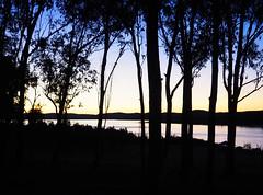 Lake Copeton (Kaptain Kobold) Tags: kaptainkobold lake water copeton inverell nsw australia trees sunset dusk evening silhouette