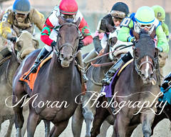 Connect and Divining Rod (EASY GOER) Tags: horse racing sports cigarmile nyra aqueduct thoroughbreds equine canon 5dmarkiii
