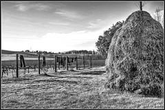 Come una foto d'altri tempi (robertar.) Tags: landscape campagna tuscany