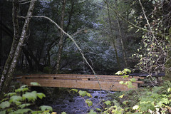 Bridge 1 (dcnelson1898) Tags: muirwoodsnationalmonument marincounty california northerncalifornia forrest outdoors trees redwoods oak douglasfir canyon nationalpark nationalparkservice nps creek water