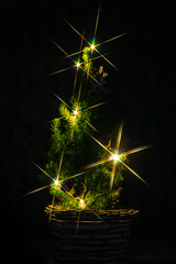 Little Xmas Tree (jtat_88) Tags: tistheseason acorn amateur art branches christmas christmastree cool creative dark december decoration digital evergreen festive filter fineart flare flares fullframe fun glittering grees holiday home hoya hoyastarsix ilce7 indoors ireland jolly lights longexposure mirrorlesscamera nature needles noel northernireland november photography pine plant season seasonal sony sonyfe2870mmf3556oss sonya7 spark specialeffect star tabletop trees wickerbasket winter xmas yule 10faves