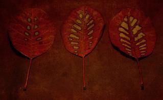 leaves  336/366