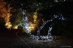 DSC04205 (Twareg) Tags: 2016 aboretum bpw enchanted forest westonbirt bathphotowalk gloucestershire england