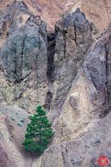 Life persists (Kasia Sokulska (KasiaBasic)) Tags: canada bc mountains fujix summer rock formations tree landscape