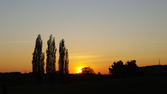 Parc Saint Quentin en Yvelines, France (jlfaurie) Tags: autumn lake france automne golf lago swan walk lac paseo 78 francie ballade cygne cisne otonio yvelines 20102011 jlfr mpmdf gladysmichelmaguet parcsaintquentinenyvelines