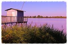 Carrelet sur les berges de la Garonne (Les photos de LN) Tags: nature eau lumire rivire paysage garonne roseaux berges fleuve vgtation aquitaine carrelet rivages stlouisdemontferrand cabanepcheur