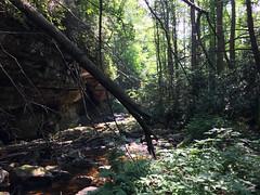 Red Run Falls (Bitmapped) Tags: blackfork cheatriver dryfork hendricks mississippiriver monongahelanationalforest monongahelariver ohioriver redrun redrunfalls rivers tuckercounty usa westvirginia